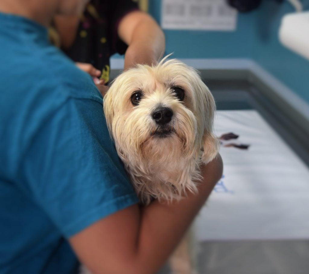 Грижа към животните Д-р Аспарух Ценев Ветеринар
